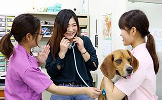 動物看護福祉コース 診察体験