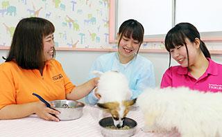 ペットケア総合コース 離乳食体験